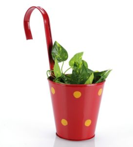Pepperfry- Buy Red Metal Polka Dots Railing Planter Pot at Rs 129