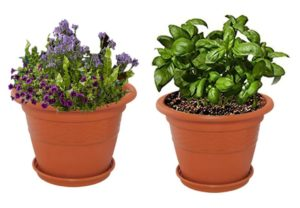 Pepperfry- Brown Plastic 10 Inch Heavy Duty Planters Pots - Set of 2 at Rs 119